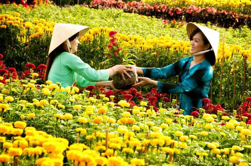 Mùa hoa ngày tết - Tour du lịch miền Tây