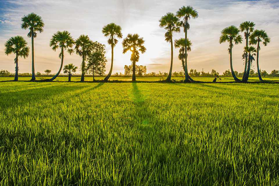 Du lịch An Giang sẽ mang lại những trải nghiệm tuyệt vời về miền Tây sông nước.