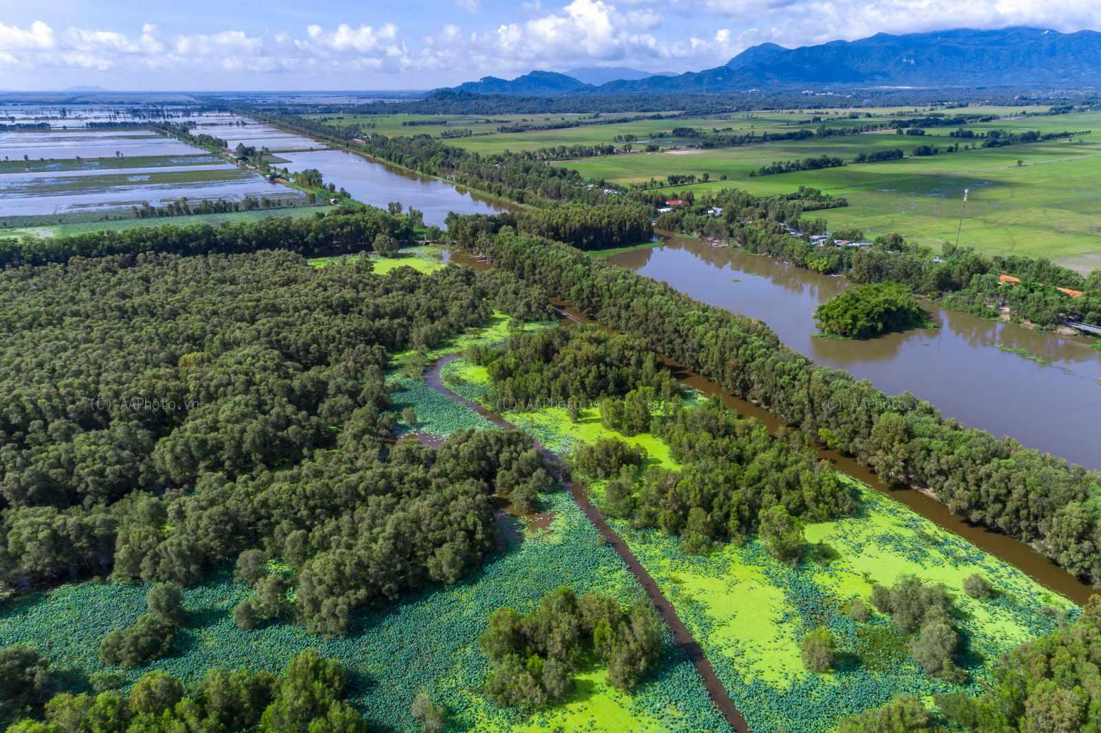 Rừng tràm Trà Sư - điểm đến tour An Giang cực kỳ nổi tiếng hiện nay.