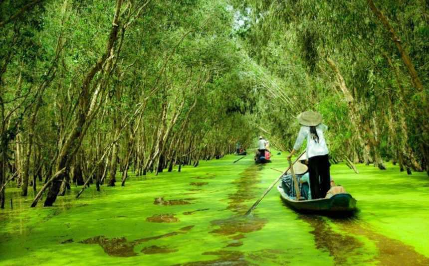 Chèo thuyền qua những tán cây, mảng bèo xanh ươm thế này cảm giác như đang lạc vào tiên cảnh vậy. Tour du lich An Giang.