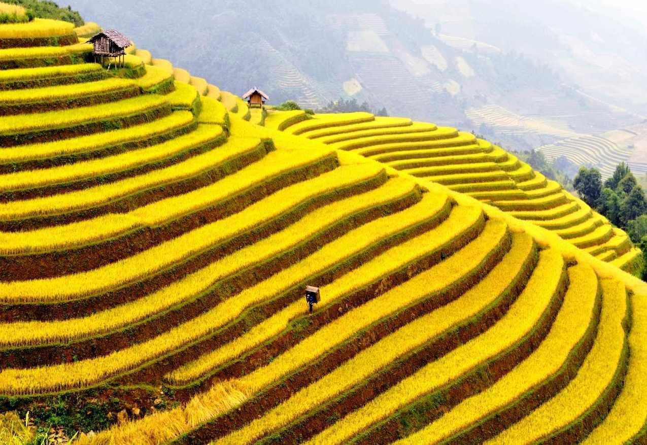 Những ruộng bậc thang huyền thoại này đã rất quen thuộc với khách du lịch Đông Bắc.