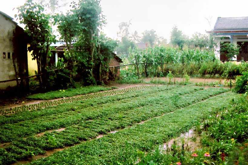 Đến làng rau Trà Quế, bạn còn được tự mình trải nghiệm trồng rau nữa đấy.