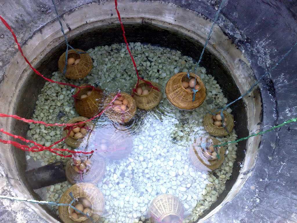 Tour du lịch miền Nam - Thưởng thức trứng luộc từ suối nước nóng Bình Châu