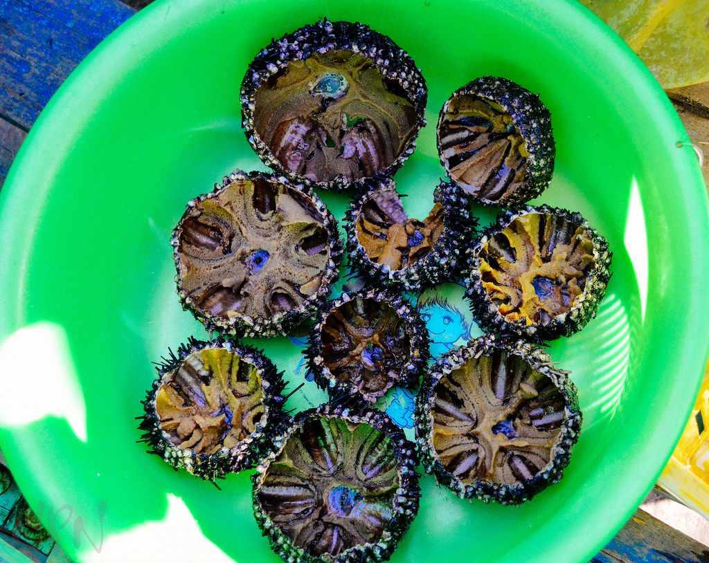 Nhum biển nướng mỡ hành là món ăn bạn phải nếm thử khi đi tour du lịch Nam Du.