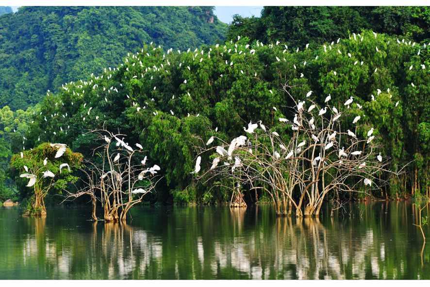 Vườn chim Thung Nham là điểm đến cực kỳ thu hút khách du lịch Ninh Bình.