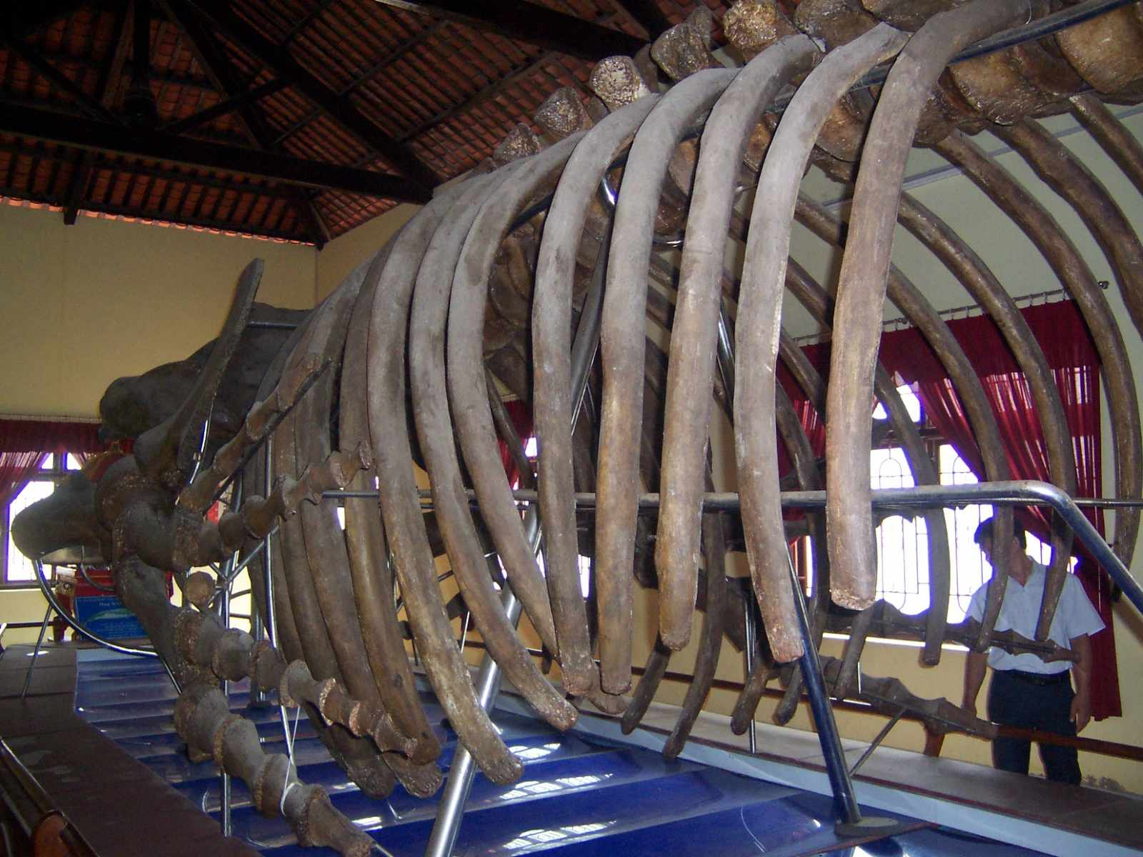 Tour Phan Thiết - Chiêm ngưỡng bộ xương cá voi lớn nhất Đông Nam Á