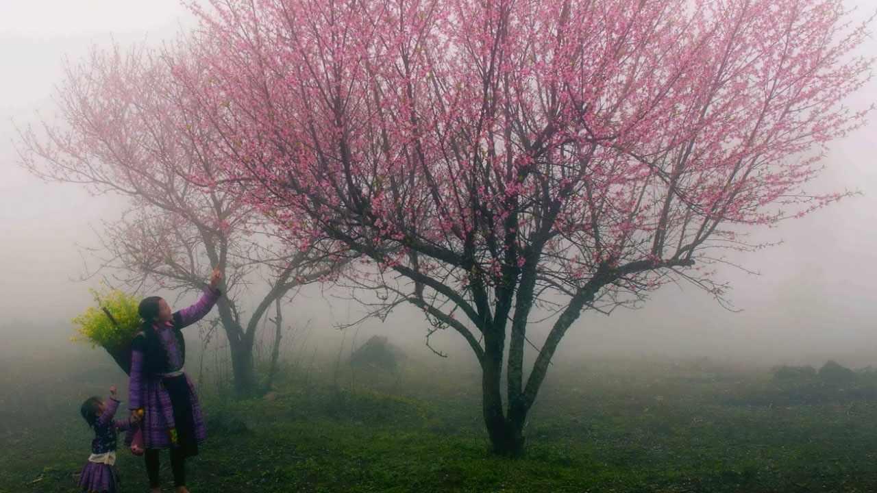 Tour Sapa mùa xuân - Ngắm hoa đào Tây Bắc những ngày xuân