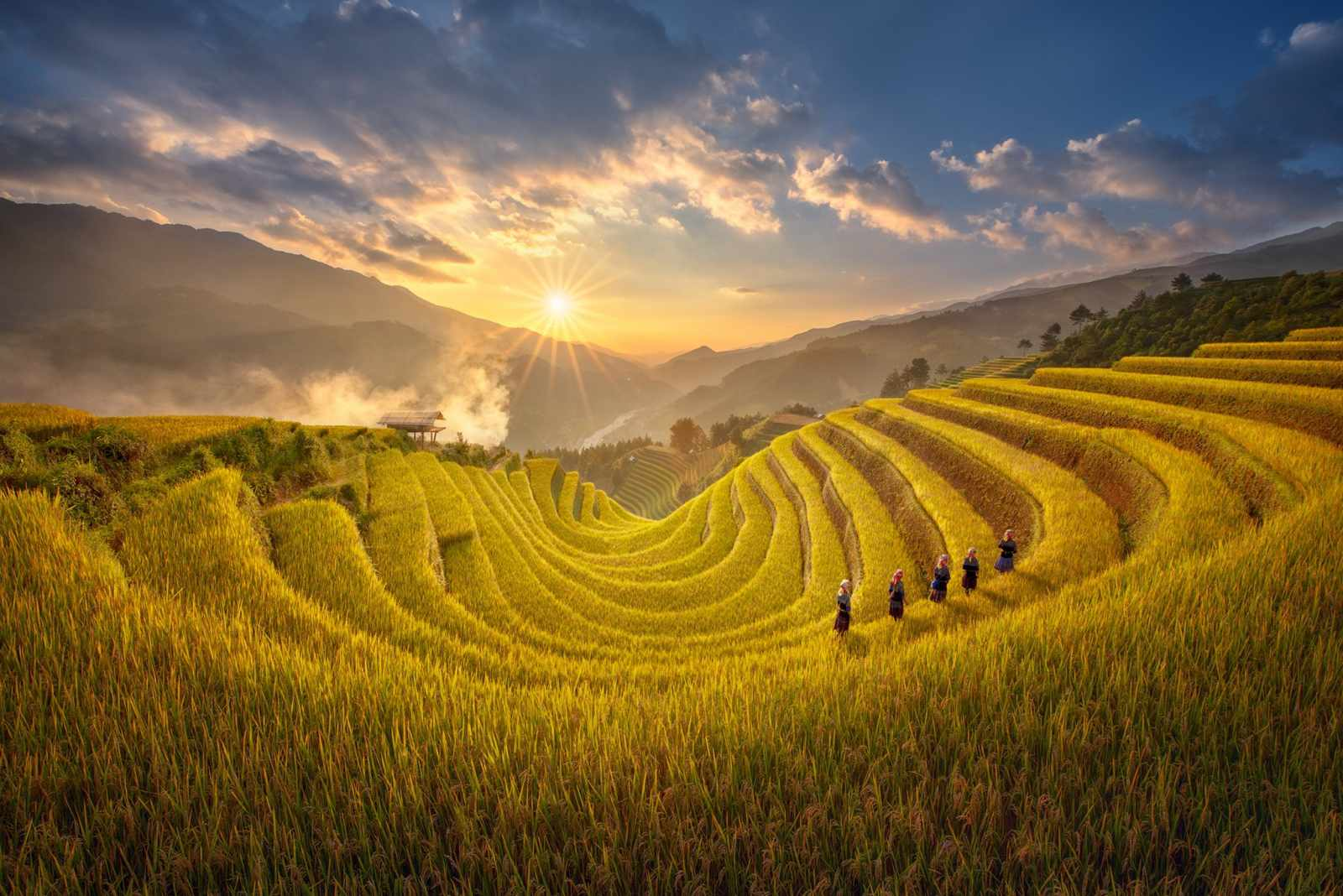 Tour Tây Bắc - Tây Bắc vàng rực một màu lúa chín