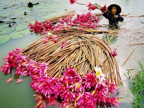 Du lịch Miền Tây – Cái Bè – Cần Thơ – Cà Mau 3 ngày 2 đêm giá tốt từ Sài Gòn